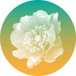 logo_USN_2016